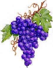 Grapes5-w